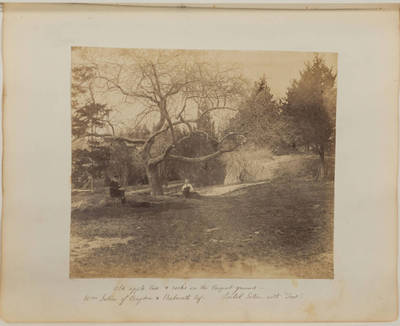 "Old apple tree and rocks on the Croquet ground; Wm Seton of Cragdon and Parbrooth Esq.; Isabel Seton with ""Trot"""