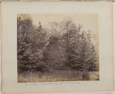 Dog-wood clump; Descent to the wishing well; Hemlocks and Oaks